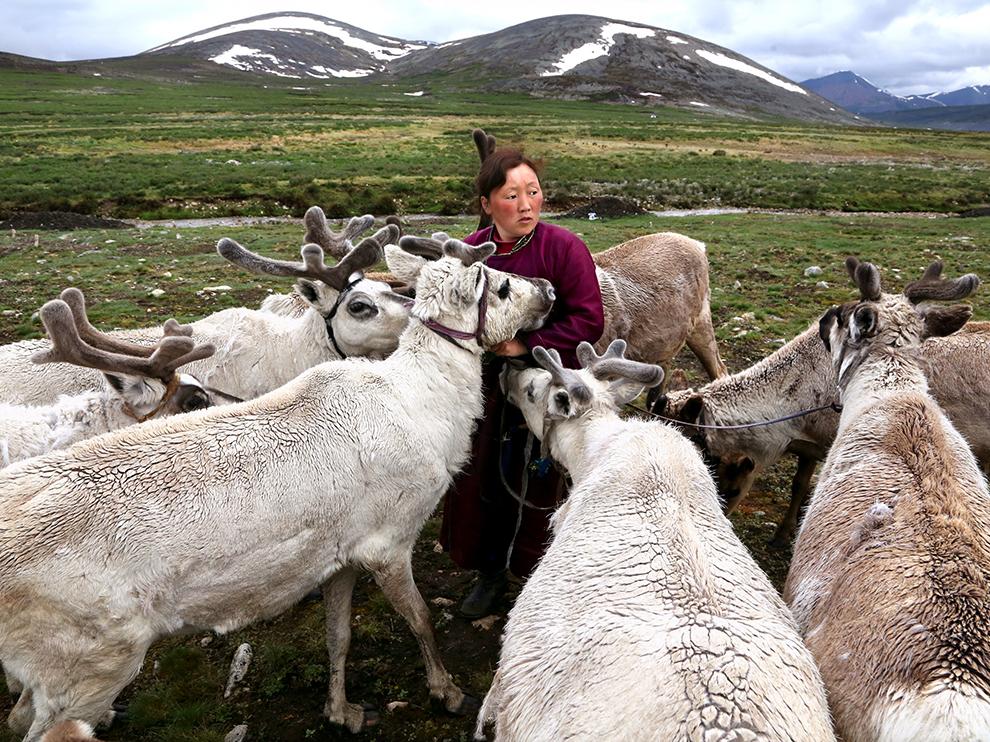 Оленевод, Монголия